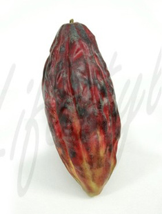 Cacao fruit (12/Karton)    17